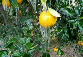 توصیههای هواشناسی به کشاورزان به دنبال ورود جبهه هوای سرد به کشور