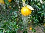 احتمال وقوع سرمازدگی در باغهای فارس