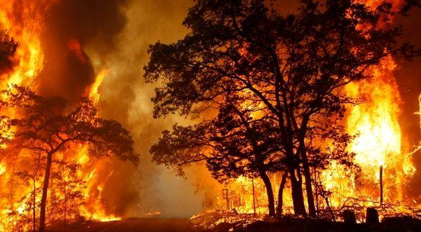 اقدامات پیشگیرانه جلوگیری از آتشسوزی و قاچاق چوب تاغ در استان سمنان در دستور کار است