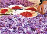امسال فروش زعفران در خراسان شمالی به صورت تک فروشی انجام نمی شود