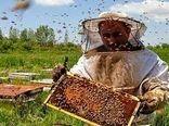تولید سالانه بیش از 98 تن عسل توسط زنبورداران شهرستان سرعین