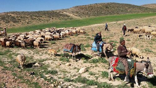 کرونا کوچ بهاره عشایر فارس را به تاخیر انداخت