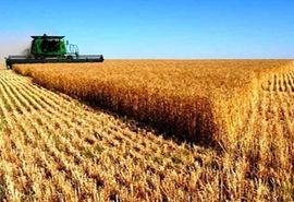تولید ۵۴۰ هزارتن گندم و جو در اراضی کشاورزی استان اصفهان