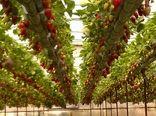 کشاورزی ایران سالمترین محصول آسیایی را دارد