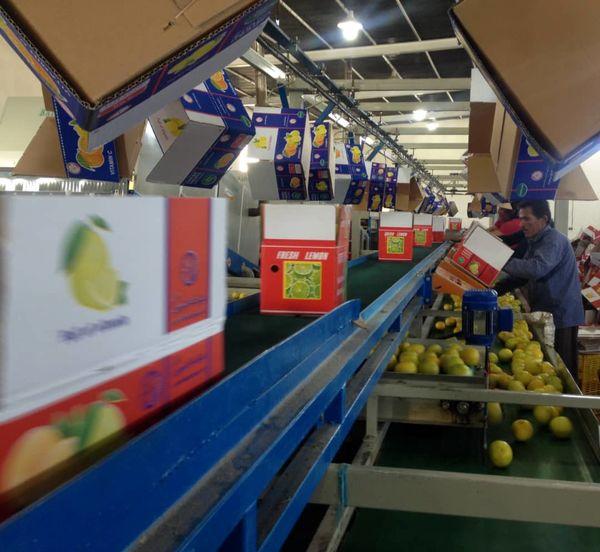 جهرم، نخستین شهر فارس در بستهبندی مکانیزه محصولات باغی