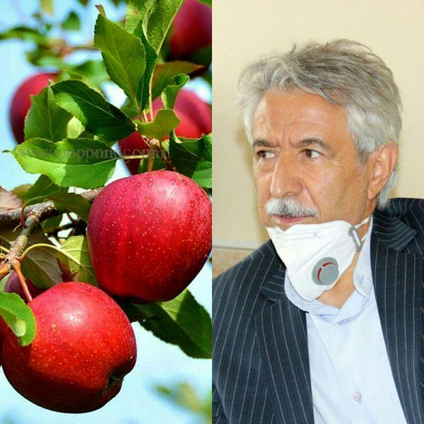 پیشبینی تولید بیش از 37 هزار تن محصولات باغی از باغات شهرستان کرمانشاه