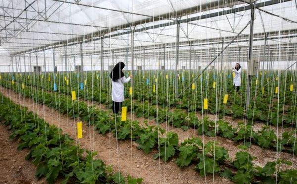 بهره برداری از ۱۲ طرح گلخانه ای در چهارمحال و بختیاری