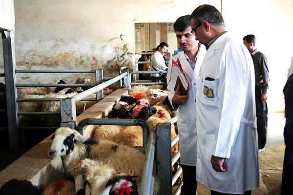 نظارت بر استحصال 61 هزار تن گوشت