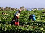 سرمایه گذاری 250میلیارد ریالی بخش خصوصی در کشاورزی چهارمحال وبختیاری