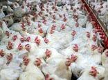 کشتار ۴۸۰ تن مرغ در استان اصفهان