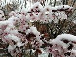 سرما و تگرگ بیش از هزار میلیارد ریال به مزارع و باغات میاندوآب خسارت وارد کرد