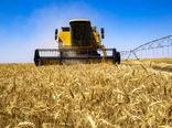 275دستگاه کمباین، مشغول برداشت غلات از مزارع کشاورزی قزوین هستند