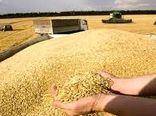 کاهش میزان خرید گندم در خراسان شمالی