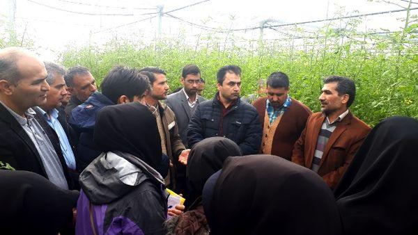 برگزاری دوره آموزشی اصول احداث و مدیریت گلخانه در خراسان جنوبی