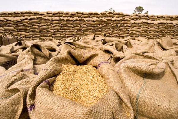 ۷۵۲ هزار تن گندم توسط تشکلهای تعاون روستایی خریداری شد