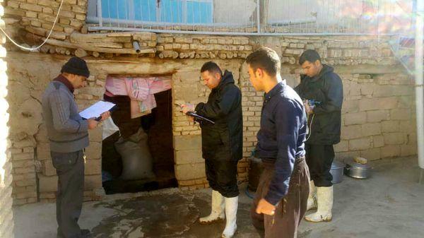 آغاز طرح واکسیناسیون دامهای سنگین شهرستان کیار