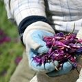هشدار نسبت به افزایش قاچاق گیاهان دارویی به خارج