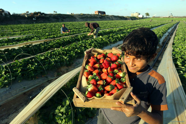 وجود بیش از 360 نوع فرصت شغل در بخش کشاورزی