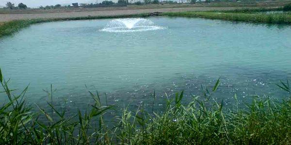 ماهیدار کردن و پرورش کپور ماهیان در استخر های ذخیره آب کشاورزی