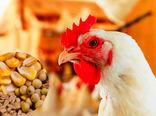 افزایش 280 میلیارد تومانی هزینه تولید هر کیلوگرم گوشت مرغ برای مرغداران طی یک ماه