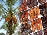 افزایش ۱۰ درصدی حجم تولید و کیفیت خرما در کشور