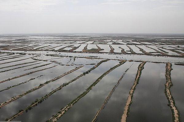 آخرین وضعیت پرداخت غرامت به بخش کشاورزی استان های سیلزده
