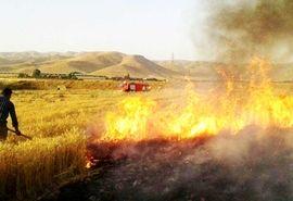 ضرورت حفظ بقایای گیاهی و مضرات آتش زدن کاه و کلش بعد از برداشت محصول از سطح مزارع