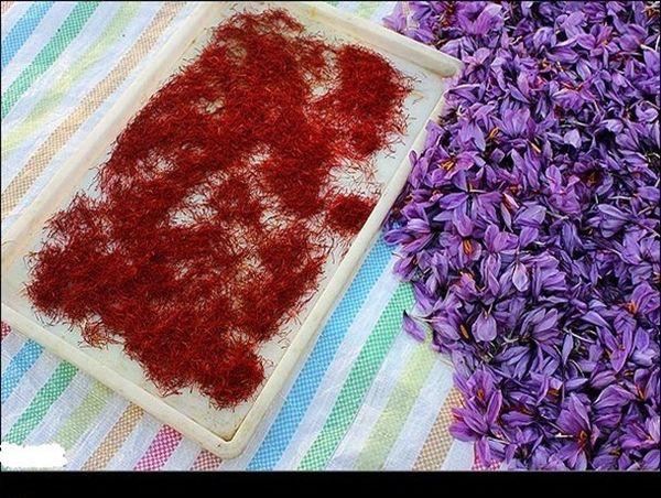 تولید ۲.۵ تن محصول خشک زعفران در یزد