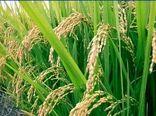 اجرای طرح کشاورزی قراردادی در استان سمنان
