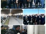 یکی از بزرگترین گاوداری های غرب کشور در کردستان افتتاح شد