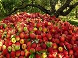 افزایش 600 درصدی صادرات سیب