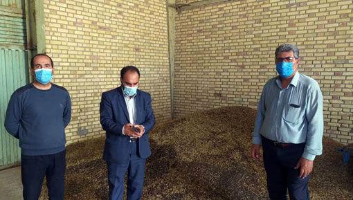 تولید بیش از یکصدتن محصول کلزا و گلرنگ در سطح شهرستان کلیبر