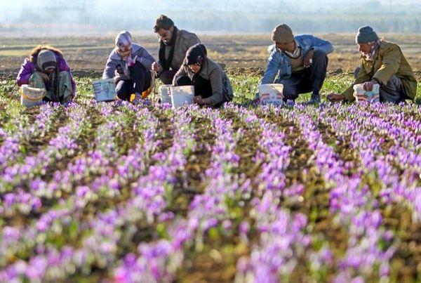 اجرای استاندارد شایستگی گیاهان دارویی در مناطق روستایی