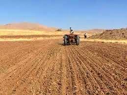 قرارگیری ۳۰ هزار هکتار از اراضی زراعی شهرستان آبدانان تحت کشت غلات پاییزه