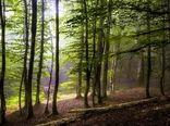 غنیسازی ۱۸۲ هکتار از جنگلهای هیرکانی خراسان شمالی