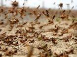 مصوبه اختصاص ۲۰۰ میلیارد ریال برای مبارزه با آفت ملخ صحرایی ابلاغ شد