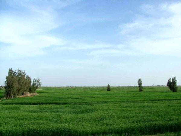 سایتهای الگوی کشت محصولات کمآببر و اقتصادی در منطقه سیستان اجرا شد