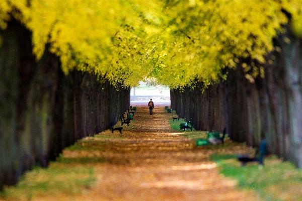 پاییز در اروپا