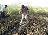 اعمال تعرفه بر محصولات کشت فراسرزمینی