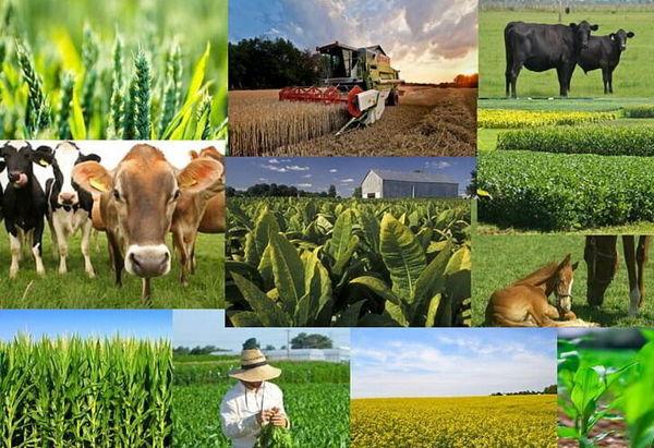 شاخص قیمت تولیدات زراعی، باغی و دامداری سنتی در بهار ١٤٠٠