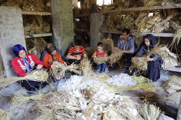 ارتقای دانش زنان روستایی برای رشد نوغانداری