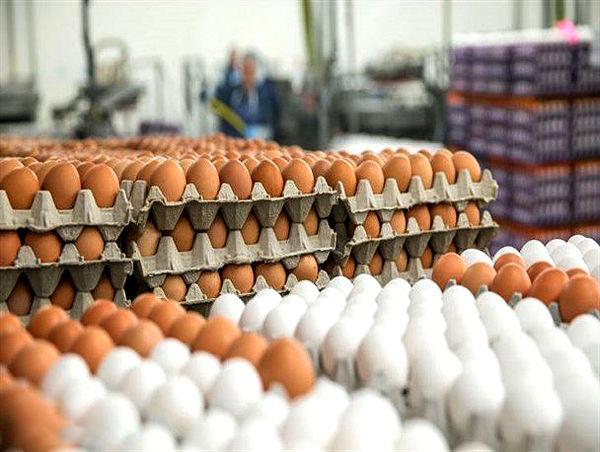 تأمین هشت درصدی تخم مرغ کشور در قزوین