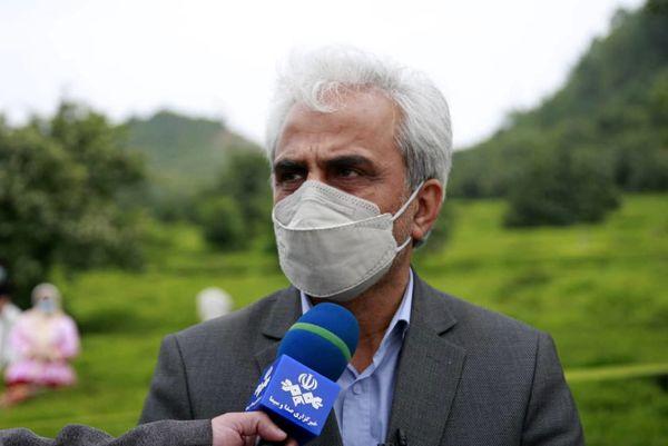خریداری بالغ بر 52هزار تن برگ سبز چای از کشاورزان گیلانی و مازندرانی