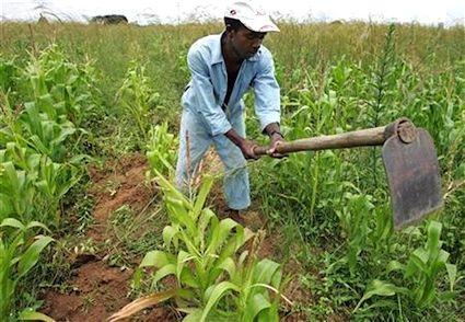 افزایش بهرهوری مولفه مهم تامین امنیت غذایی است
