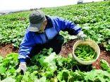 اقتصاد لرستان مبتنی بر فعالیتها و تولیدات بخش کشاورزی است/ تولید 3 میلیون تن محصولات کشاورزی