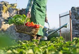 پیامدهای منفی سرپیچی از دستورالعمل جدید استانداردهای اتحادیه اروپا و اوراسیا بر صادرات و تولید کشاورزی