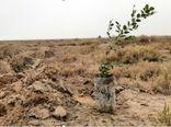 ۲۶ هزار اصله نهال جنگلی در بجنورد توزیع میشود