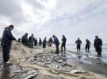 صید ۱۱ هزار تن ماهی استخوانی در دریای خزر