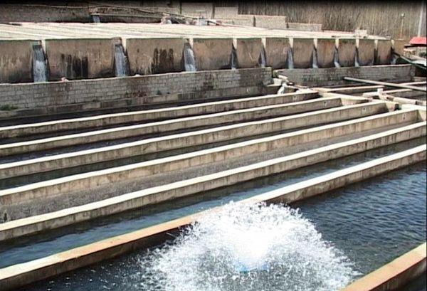 تولید سالانه هزار تن ماهی در بوئین زهرا