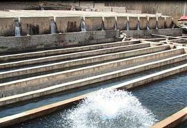 تولید سالانه  ده میلیون قطعه بچه ماهی قزلآلا، در مرکز آبزیپروری فریدون شهر